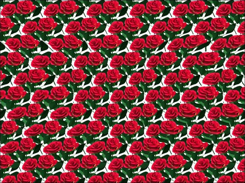 Que voyez-vous ?