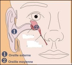Les osselets se trouvent dans une cavité qui communique avec la gorge (pharynx) et l'oreille interne. Comment appelle-t-on le canal permettant la communication ?