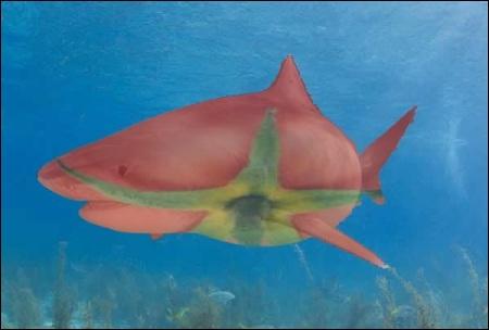 Ce requin est-il authentique ?