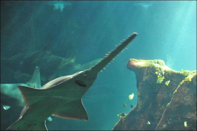 Est-ce que ce requin existe vraiment ?