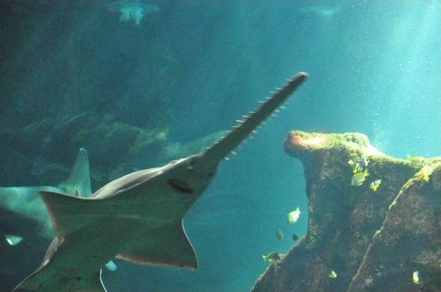 Est-ce que ce requin existe ?