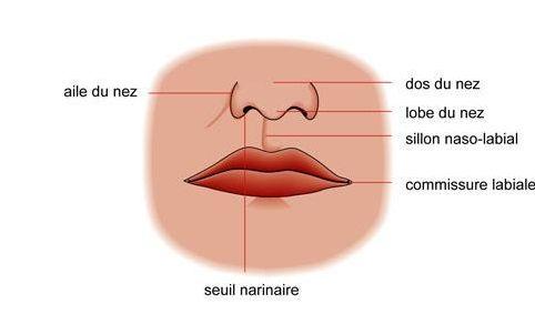 SC5 - Connaître le nez