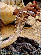 Quel est ce serpent?