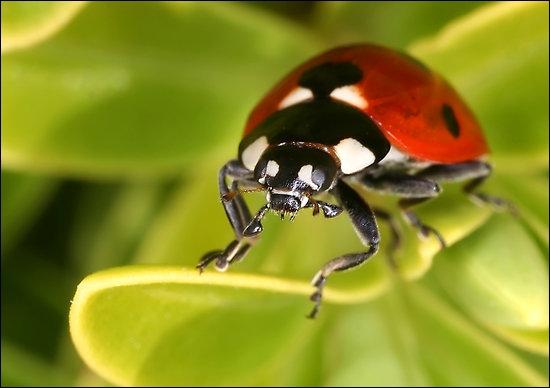 quizz des insectes traduire en anglais quiz anglais traduction. Black Bedroom Furniture Sets. Home Design Ideas