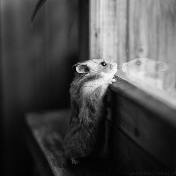 Cliquez sur la photo pour l'agrandir, ce petit rongeur a une queue minuscule, c'est forcément une souris !