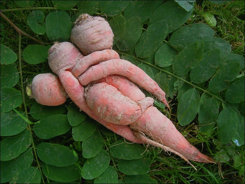 Les végétaux, eux aussi, fêtent la Saint-Valentin. Quel légume reconnaissez-vous ?