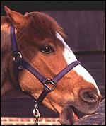 Pourquoi le cheval mord-il la clôture ?