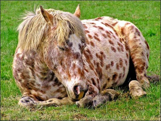 Le cheval dort :