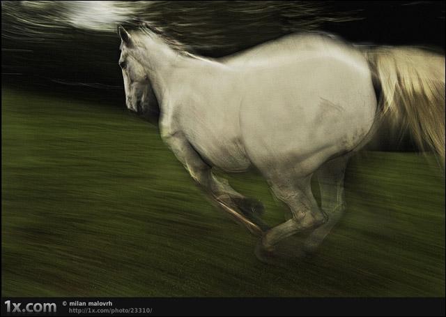 Il a écrit cette chanson :  Le petit cheval blanc  !