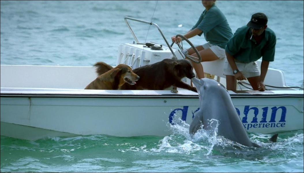 La queue du dauphin, comme celle de tous les poissons, est verticale !