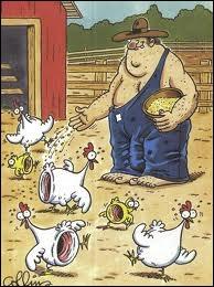 Les éleveurs de volaille ...