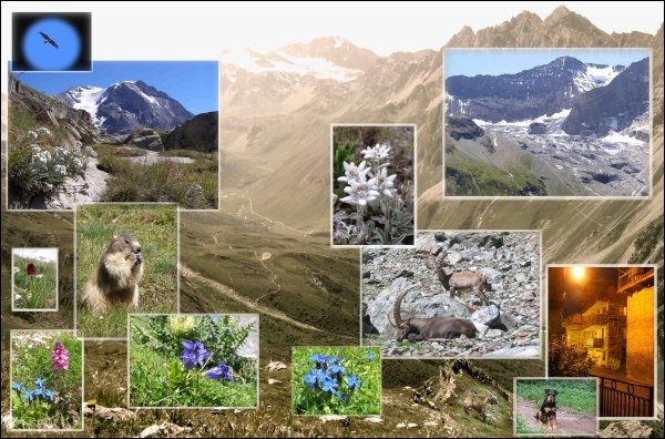 Premier né des parcs nationaux français, cet endroit couvre environ un tiers du département de la Savoie et constitue une des plus grandes réserves naturelles d'Europe.