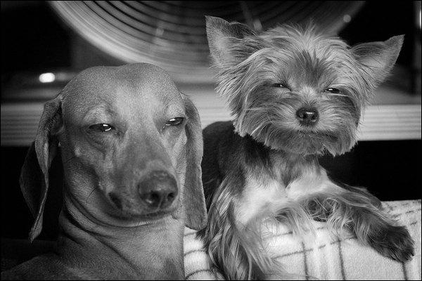 Dans cette série télé française, il est vétérinaire, elle est médecin !