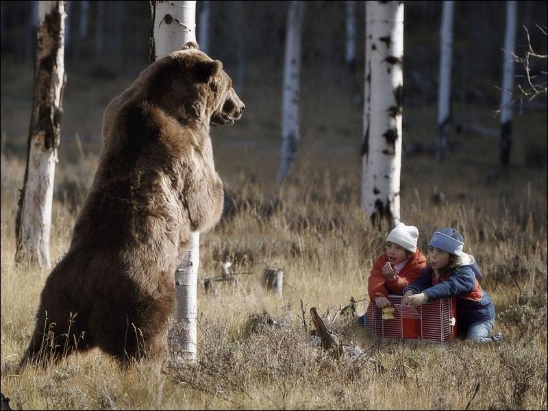 Je sais bien qu'il s'agit d'un ours, mais de quelle espèce ?