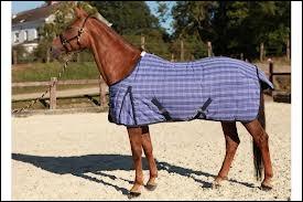 Que porte ce cheval ?