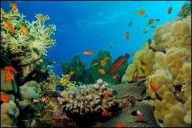 Quel golfe de la mer Rouge sépare l'Arabie Saoudite de la presqu'île du Sinaï ?