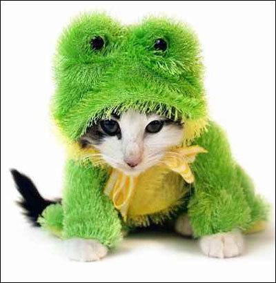 """Résultat de recherche d'images pour """"quel animal ressemble à la grenouille"""""""