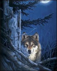 Les loups s'en viennent la nuit venue...