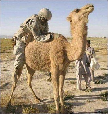 Ne cherchez pas de mauvaise intention chez ce GI, cherchez plutôt le nom de cet animal, visible sur les paquets de cigarettes  Camel  !