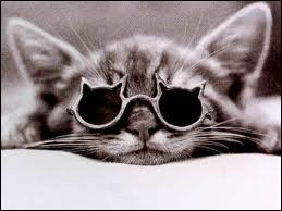 Oh ! Ce petit a des lunettes qui lui vont très bien ! Mais ... quel est le nom d'origine latine de cette sorte d'animaux ? Tu le sais toi ? Dis-le-moi ! Je t'en prie !