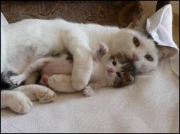 Oh ! Une chatte et ses enfants ! C'est trop beau à voir ! Mais la chatte est très grande ! Bizarre ... hier elle était toute petite ! Combien mesure un chat en moyenne ?