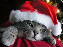 Oh ! Il est déguisé en Père Noël ! Mais ... de combien d'os son corps est-il constitué ? Le savez-vous ? Alors répondez vite !