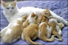 Oh ! Trop mignon ! Une petite_______avec ses bébés ! Oh ! Ça recommence ! À vous de trouver la réponse ! Allez ! 3 . 2 . 1 . Go ! Répondez !