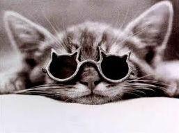 Connaissez-vous bien les chats ?