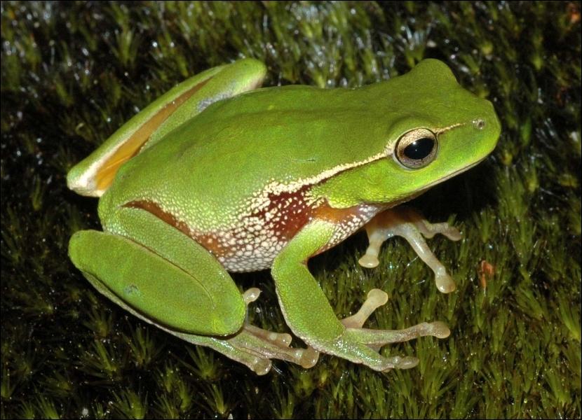 Comment se traduit une  grenouille  en anglais ?