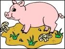 Tout est bon dans le cochon !