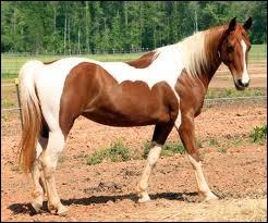 Quizz Races de chevaux - Quiz Chevaux, Races, Monde