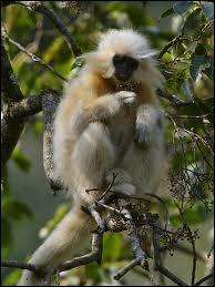 Quelle est cette race de singes ?