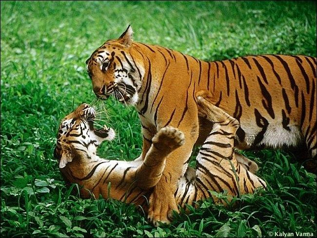 Si l'on vous compare à cet animal, que peut-on dire de vous ?