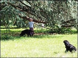 Qui chantait  Petit, n'écoute pas les grands parler, va-t-en jouer dans le jardin, il y fait meilleur ce matin  ?
