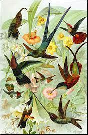 Quel est l'oiseau national de la Jamaïque ?