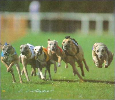 Quel est le chien le plus rapide au monde ?