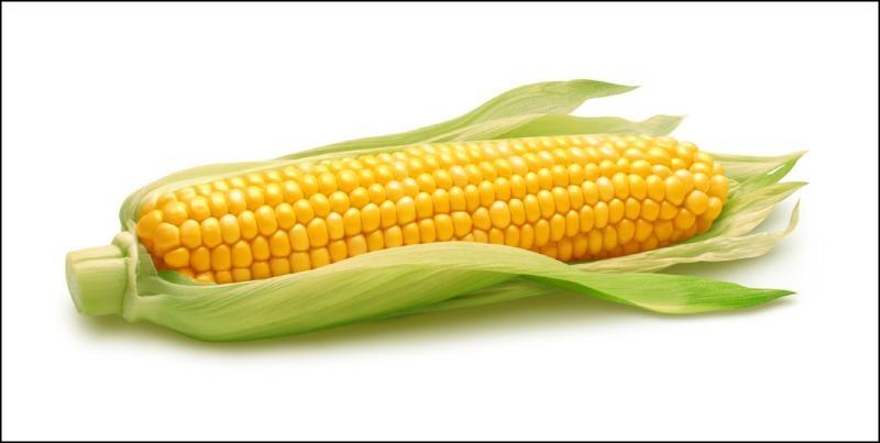 Cette céréale, le blé d'Inde pour un Canadien, porte un nom dont l'anagramme est un synonyme de :