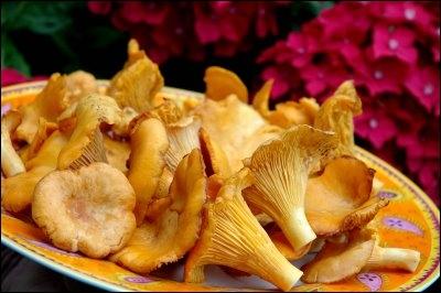 Ce délicieux champignon porte un nom qui est l'anagramme d'un mot synonyme de :