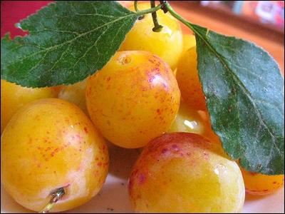 Si vous mélangez les lettres du nom de cette petite prune, spécialité du Nord-Est de la France, vous obtiendrez un mot synonyme de :