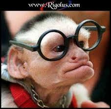 Pourquoi un singe a-t-il besoin de lunettes ?