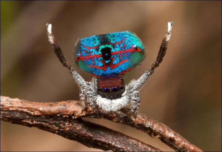 Qu'il soit macao ou pas, c'est un beau parleur superbement coloré !