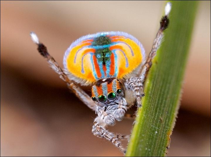Quelques une des très nombreuses espèces d'araignées le sont !