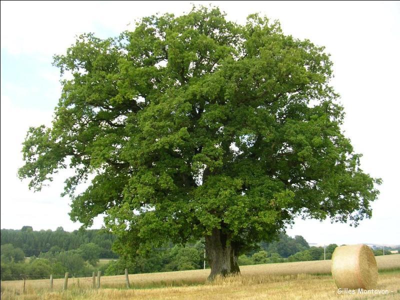 Quizz les arbres quiz arbres - Quand tailler un noisetier ...