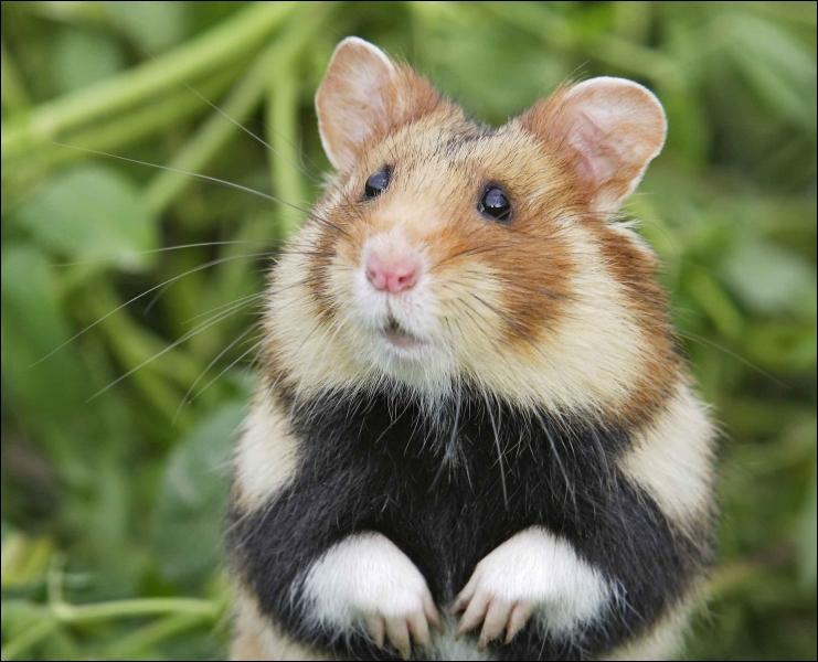 Le temps est plus que pourri pour ce petit animal, en voie critique d'extinction !