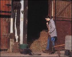 Je dois curer l'hébergement du cheval 1 fois par mois.