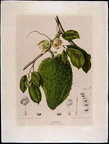 Quel est ce fruit, également appelé anone ?