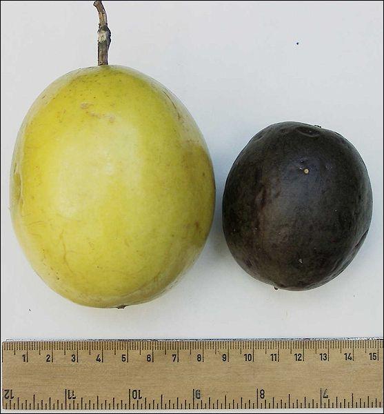 Comment se nomme ce fruit (sur l'image, la forme pourpre et la forme jaune) ?