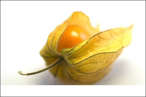 Comment s'appelle ce fruit, aussi nommé coqueret du Pérou ou cerise de terre ?