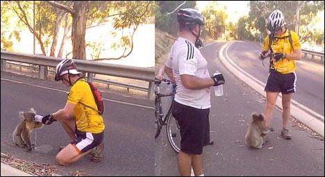 Sympathiques, ces deux cyclistes, elles s'arrêtent pour donner à boire à un jeune panda !