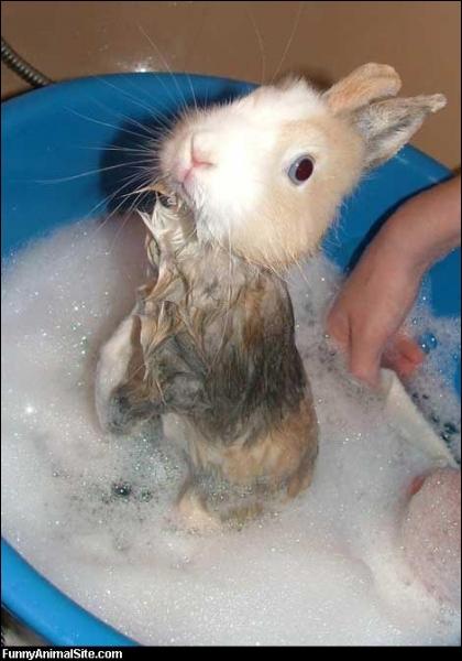 Quelle maladie mortelle fait des ravages chez le le lapin européen ?